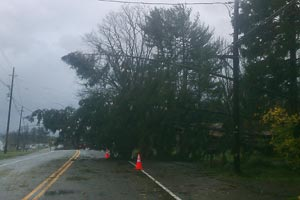 downed trees across road